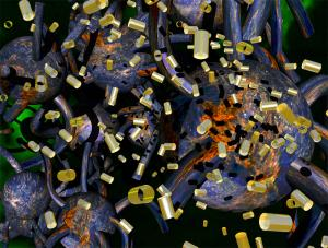 Chris Robinson - Untitled (Dark field Fibroblasts)