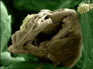 Daniela Caceta - Brazil - Bird Nest