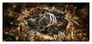 David Hylton - Nest