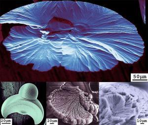 Galina Strukova - Mashrooms, Brooms, and Shells at Micro and Nano Scales - nanoart