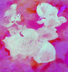 Gilberto Sossella - Italy - White roses in alizarin crimson