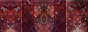Han Halewijn - Curiosity Killed the Cat