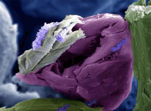 Iriny Kafiris - Brazil - Lavender Nest