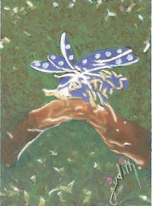 Judith Lightfeather - Nano Butterfly
