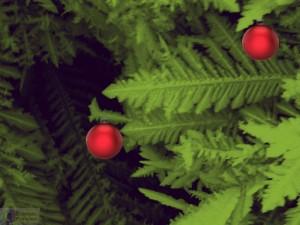 Nguyen-Siegert-Fodlmeier nanoart k12 Christmas No.2