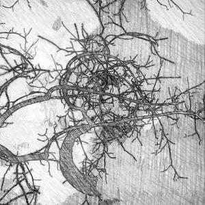 Robyn Ellenbogen - Root Formations