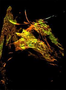 Steven Pollard-Hart-Butterfly-nanoart