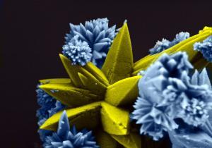Camargo Rorivaldo - Brazil - Sea Coral (Strontium Molybdate)