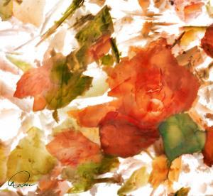 David Derr - USA - Winter Rose