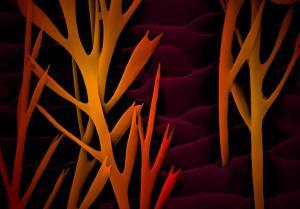 Louise Hughes - United Kingdom - Nanotrees