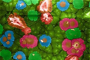 Ricardo Tranquilin - Brazil - Strange Flowers