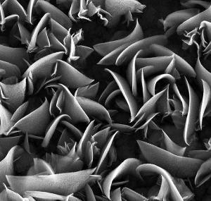Simone Battiston - Strelitzia-like Titanium Oxide