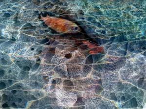 Vijay Kohar - Under Water 2006