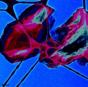 andrea-martinez-cruz-electron-microscope-graphene-flake